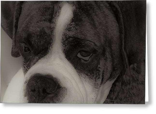 Angelic Boxer Greeting Card by DigiArt Diaries by Vicky B Fuller