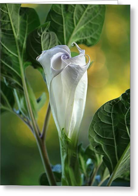 Unfold Greeting Cards - Angels Trumpet Bud Greeting Card by Angie Vogel