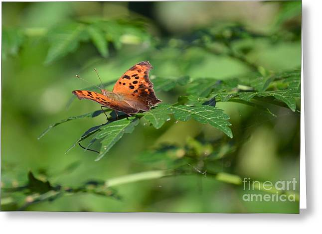 Orangey Greeting Cards - Anglewing Greeting Card by Kathy Gibbons