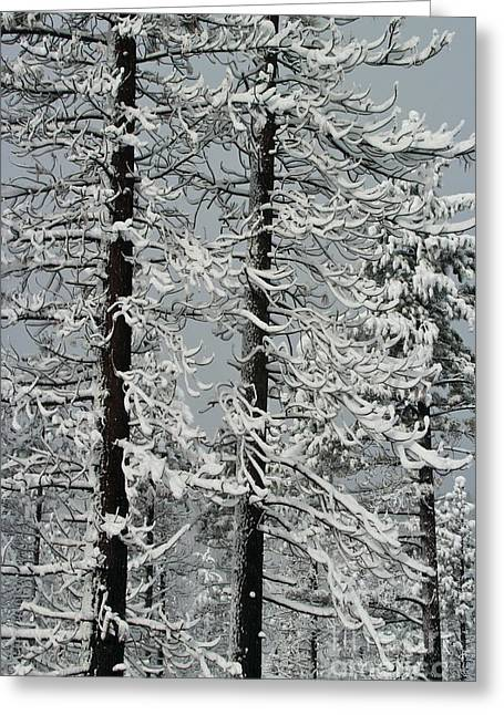 Angora Lakes Greeting Cards - Angora fire trees Greeting Card by Paula Deutz