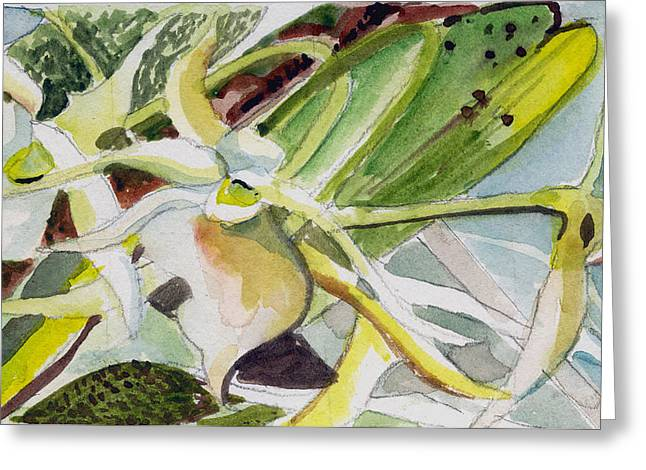 Organic Drawings Greeting Cards - Angraecum sesquipedale Greeting Card by Mindy Newman