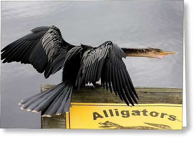 Anhinga Looking For Alligators Greeting Card by Paulette Thomas
