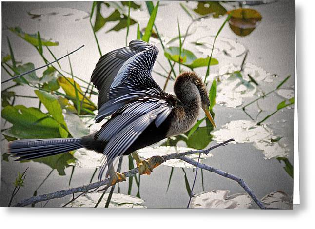 Florida Wild Turkey Greeting Cards - Anhinga Greeting Card by Rudy Umans
