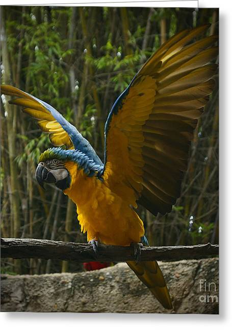 Parrot Pyrography Greeting Cards - Animal Kingdom - Flights Of Wonder Greeting Card by AK Photography