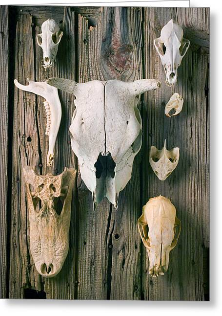 Skulls Photographs Greeting Cards - Animal skulls Greeting Card by Garry Gay