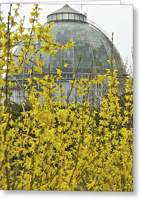 Belle Isle Greeting Cards - Anna Scripps Whitcomb Conservatory Greeting Card by Michael Peychich