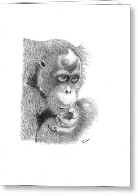 Orangutan Drawings Greeting Cards - Annie Greeting Card by Rosanna Maria