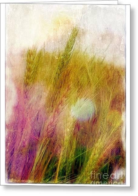 Judi Bagewll Greeting Cards - Another Field of Dreams Greeting Card by Judi Bagwell