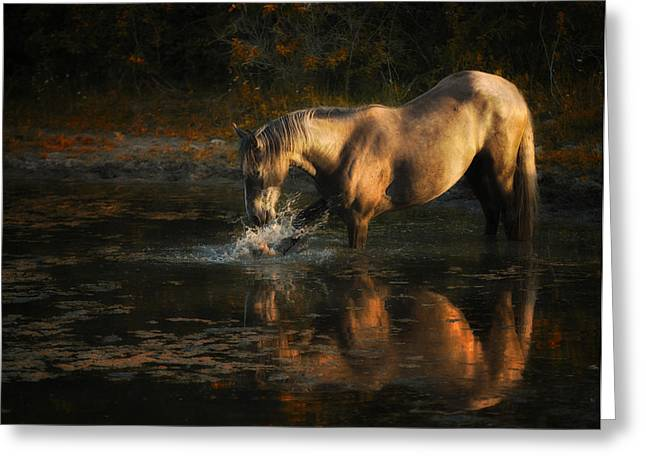Another Morning At The Pond Greeting Card by Ron  McGinnis
