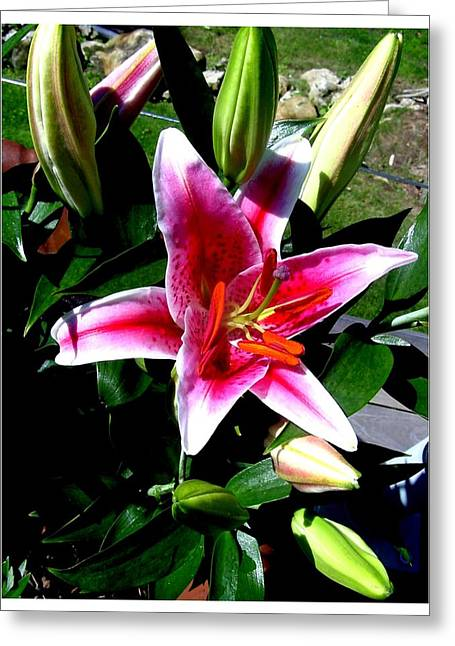 Day Lilly Greeting Cards - Another sunny day Greeting Card by Frank Wickham