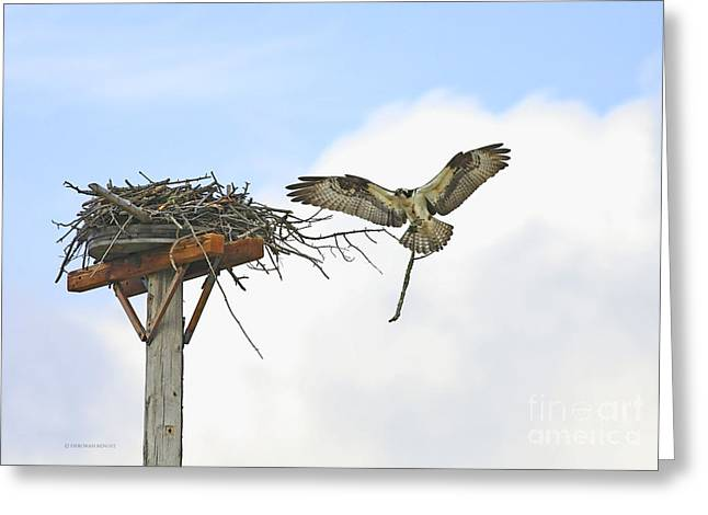 """nature Photography Prints"" Greeting Cards - Another Twig For The Nest Greeting Card by Deborah Benoit"