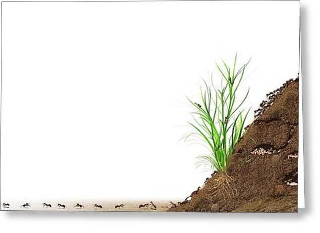 Biological Greeting Cards - Ant Mound, Artwork Greeting Card by Claus Lunau