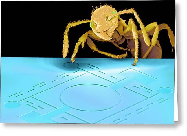 Sensor Greeting Cards - Ant On Pressure Sensor, Sem Greeting Card by Volker Steger