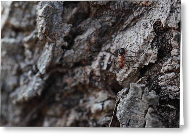 Ant Greeting Card by Pan Orsatti