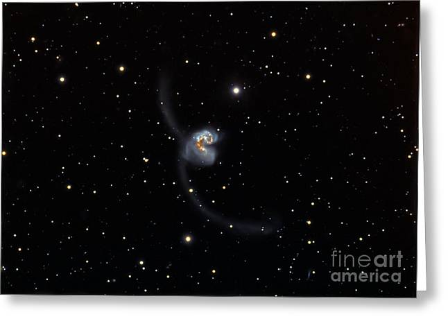 Antennae Galaxies Greeting Cards - Antennae Ngc 4038 And 4039, Interacting Greeting Card by Filipe Alves