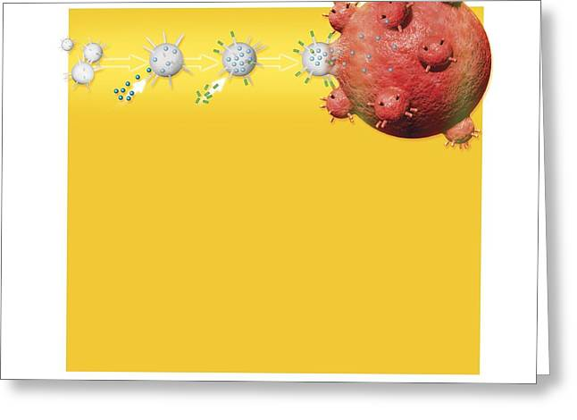 Cell Death Greeting Cards - Anti-cancer Bacteria, Artwork Greeting Card by Claus Lunau