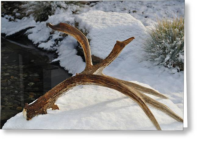 Antler 2 Greeting Card by Heather L Giltner