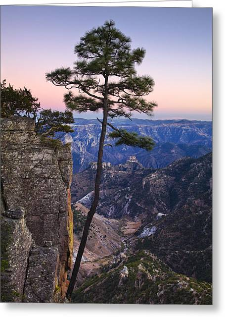 Chihuahua Colorful Art Greeting Cards - Apache Pine Tree - Mexico Greeting Card by Greg Vaughn - Printscapes
