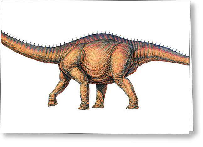 Apatosaurus Dinosaur Greeting Card by Joe Tucciarone