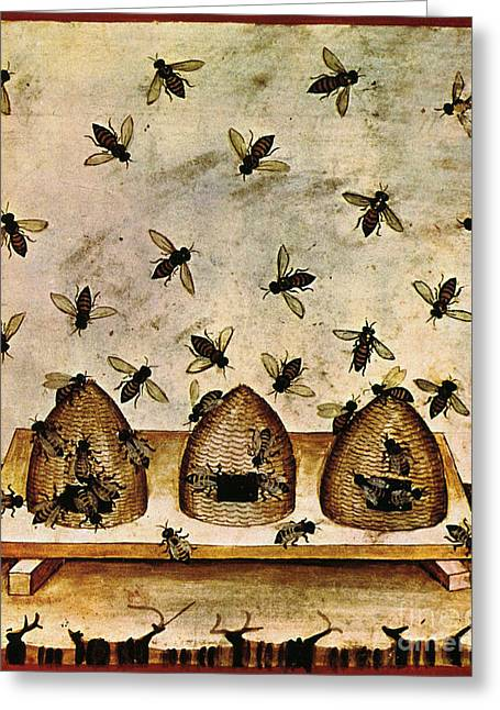 Baghdad Greeting Cards - Apiculture-Beekeeping-14th Century Greeting Card by Science Source