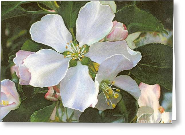 Pink Blossoms Pastels Greeting Cards - Apple Blossoms Greeting Card by Mona Younavjak Hansen