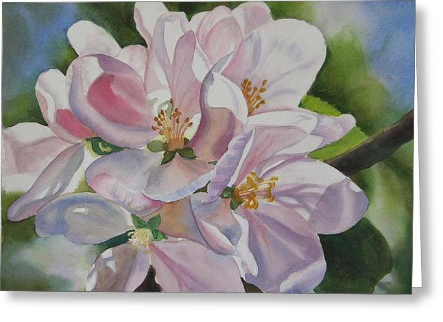 Pink Blossoms Greeting Cards - Apple Blossoms Greeting Card by Sharon Freeman