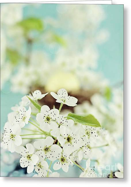 Large White Flower Close Up Greeting Cards - Apple Blossoms Greeting Card by Stephanie Frey