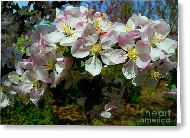 Apple Pyrography Greeting Cards - Apple Flowers Greeting Card by Alisa Tek