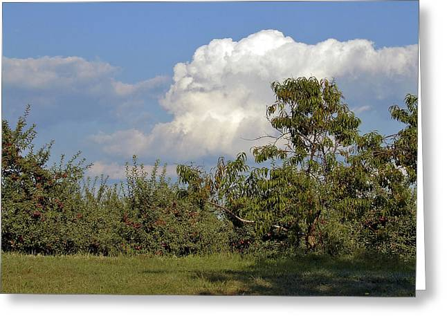 Apple Orchard Greeting Card by Richard Gregurich