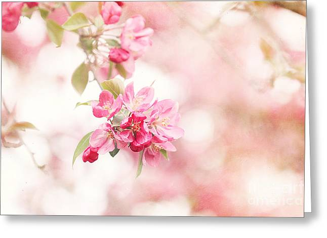 Bough Greeting Cards - Apple Tree in Spring Greeting Card by Stephanie Frey