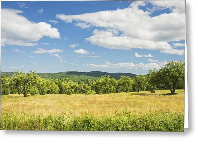 Maine Agriculture Greeting Cards - Apple Trees And Hay Field In Summer Maine Greeting Card by Keith Webber Jr