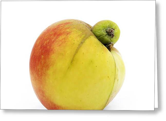 Entire Greeting Cards - Apple with an excrescence Greeting Card by Bernard Jaubert