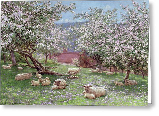 Flock Greeting Cards - Appleblossom Greeting Card by William Biscombe Gardner