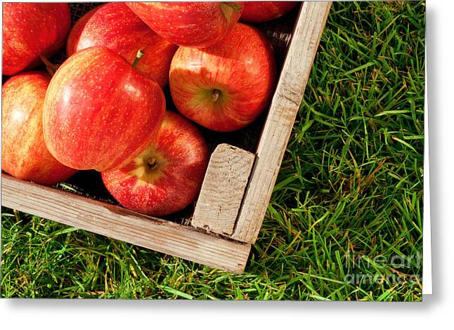 Apple Crates Greeting Cards - Apples in a crate on grass Greeting Card by Richard Thomas
