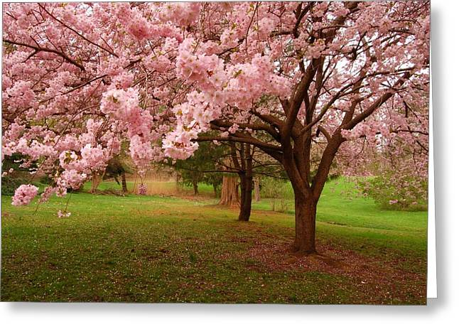 Cherry Blossoms Greeting Cards - Approach Me - Holmdel Park Greeting Card by Angie Tirado