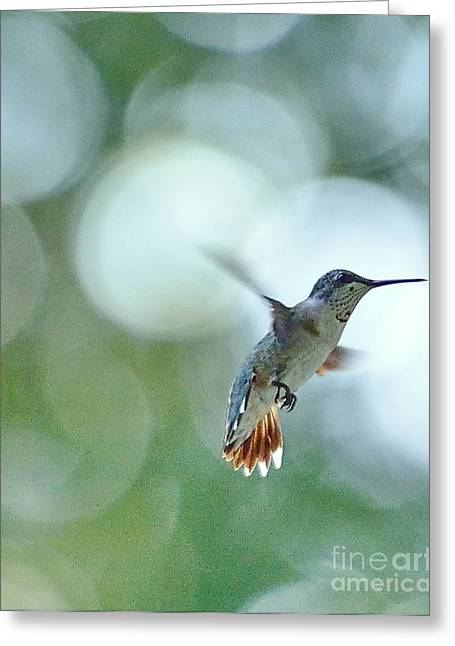 Hummingbirds Greeting Cards - Approaching the Light Greeting Card by Wayne Nielsen