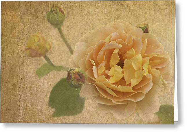 Apricot Greeting Cards - Apricot Bliss Greeting Card by Diane Schuster