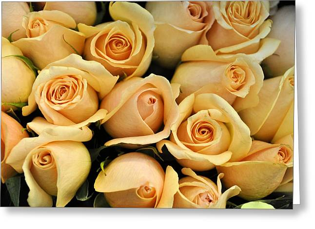 Apricot Greeting Cards - Apricot Kisses Greeting Card by Jan Amiss Photography