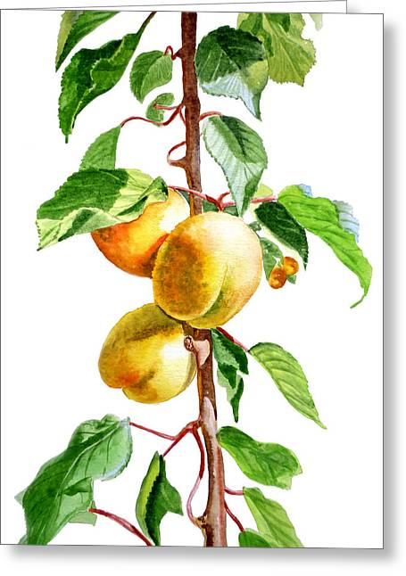 Apricots Paintings Greeting Cards - Apricots Greeting Card by Irina Sztukowski