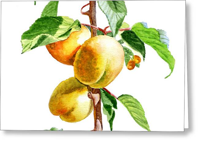 Apricots Greeting Card by Irina Sztukowski