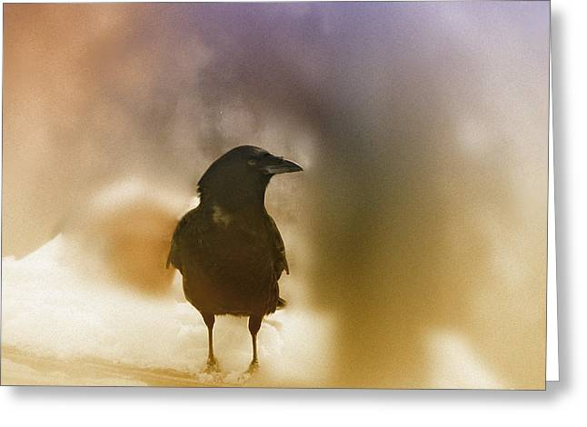 April Raven Greeting Card by Susan Capuano