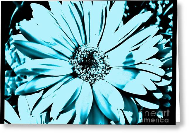 Floral Photos Greeting Cards - Aqua Daisy Blue Greeting Card by Marsha Heiken