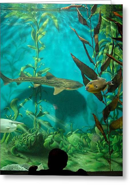 Jenkinsons Greeting Cards - Aquarium 25 Greeting Card by Joyce StJames
