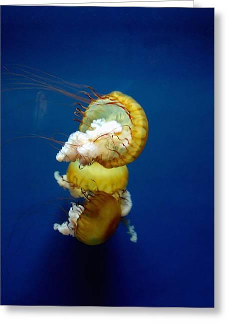 Jenkinsons Greeting Cards - Aquarium 46 Greeting Card by Joyce StJames