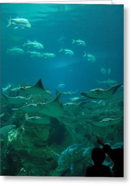 Jenkinsons Greeting Cards - Aquarium 47 Greeting Card by Joyce StJames