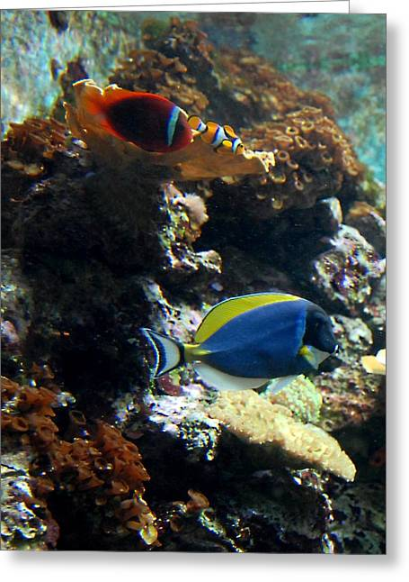 Surf City Greeting Cards - Aquarium 68 Greeting Card by Joyce StJames