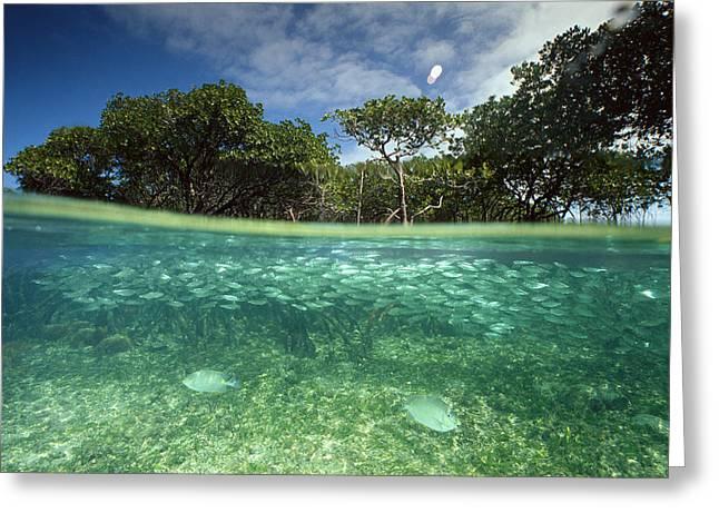 Aquatic Split Level Views Greeting Cards - Aquatic Split-level View With Fish Greeting Card by Joe Stancampiano