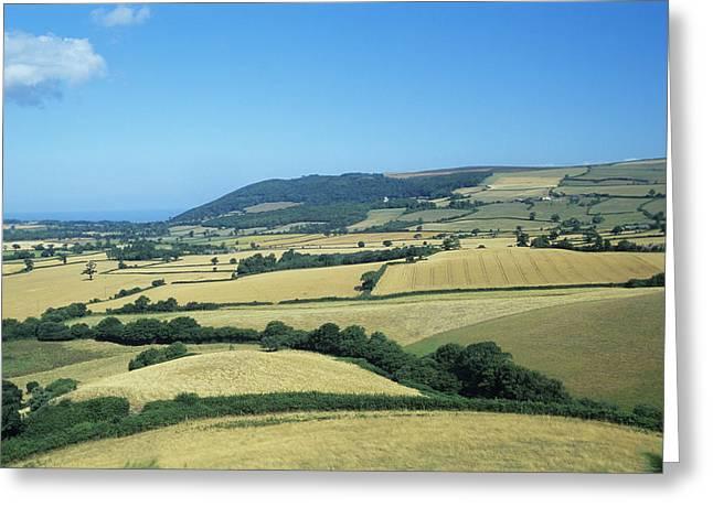 Arable Farmland Greeting Card by David Aubrey