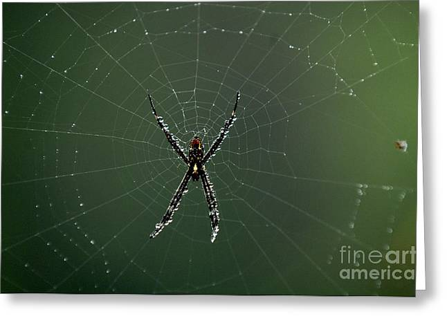 Arachnid Greeting Cards - Arachnid Greeting Card by Bob Christopher