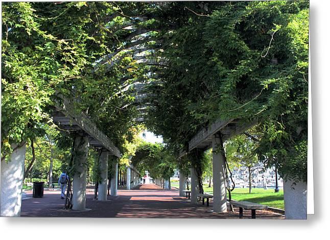 Arbor In Boston Greeting Card by Kristin Elmquist